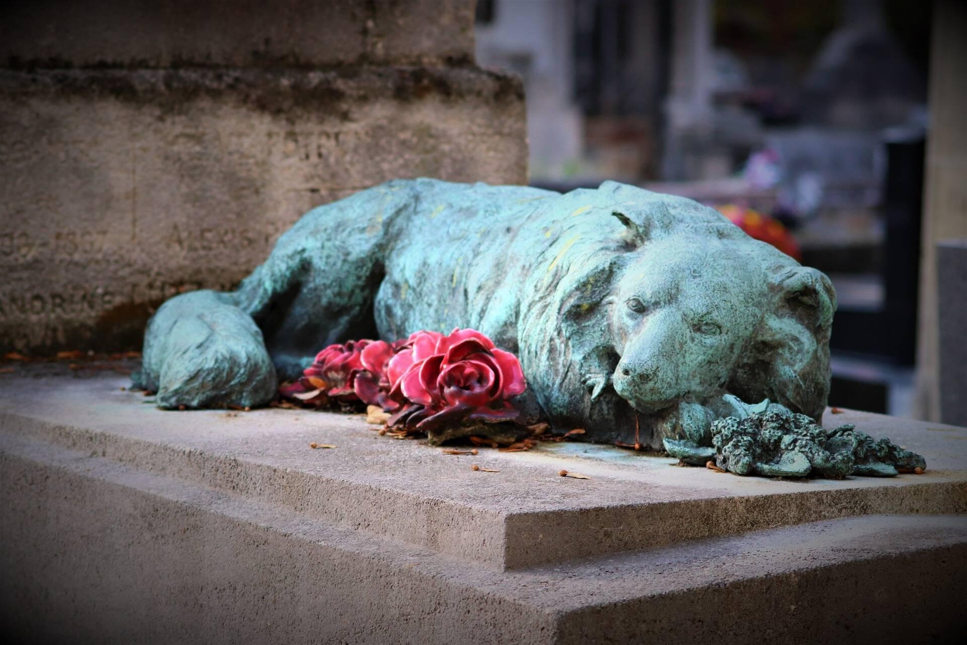 Projeto de lei defende que pets possam ser enterrados no túmulo da família