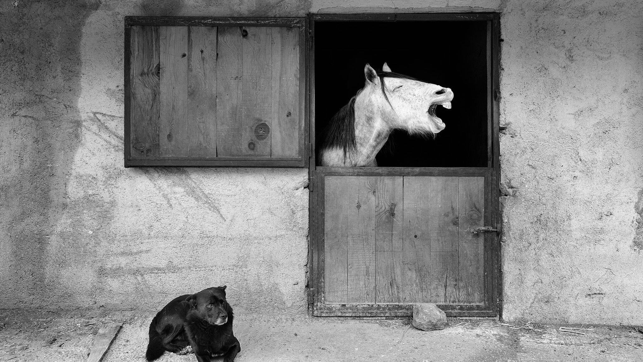 Concurso de fotos engraçadas: cavalos sorridentes, gatos malabaristas e cães 'loucos' estão entre os finalistas