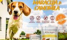 Atenção, veganos: acaba de chegar um bifinho feito para o seu cão