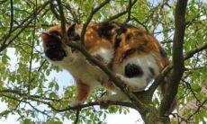 Por que os gatos gostam de altura? A ciência responde
