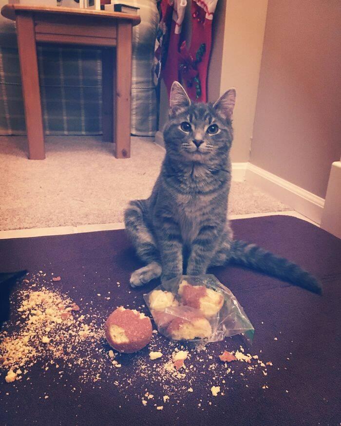 Essas fotos de cães e gatos roubando comida vão alegrar seu dia