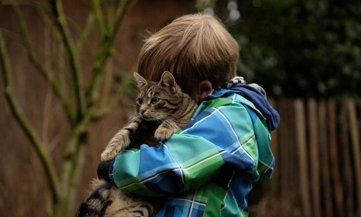 Saiba por que os gatos são os melhores animais de estimação para crianças autistas