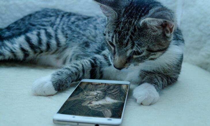 5 dicas infalíveis para tirar as melhores fotos do seu gato