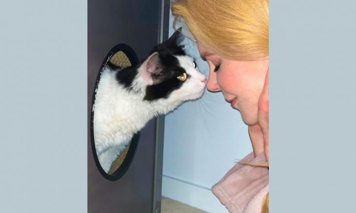 Conheça Louis, o gatinho que Nicole Kidman acabou de adotar