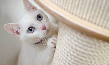 Para o seu gato, você não passa de um primata grandão e imprevisível