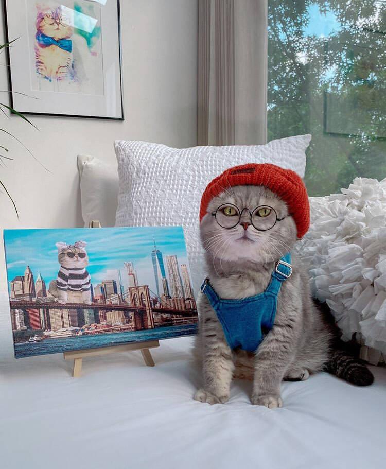 Conheça Benson, o gatinho mais estiloso da internet