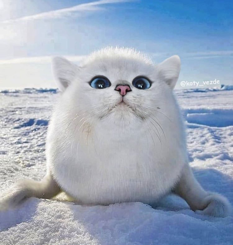 Artista coloca rostos de gato em corpos de outros animais, e o resultado é hilário