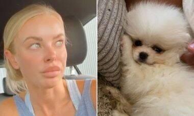 Cachorrinha comprada por influenciadora no Instagram morre de inanição dias depois