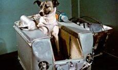 Laika, a cachorra que ajudou o homem a explorar o espaço, é tema de documentário