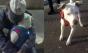 Morador de rua com câncer terminal encontra novo dono para sua cachorrinha