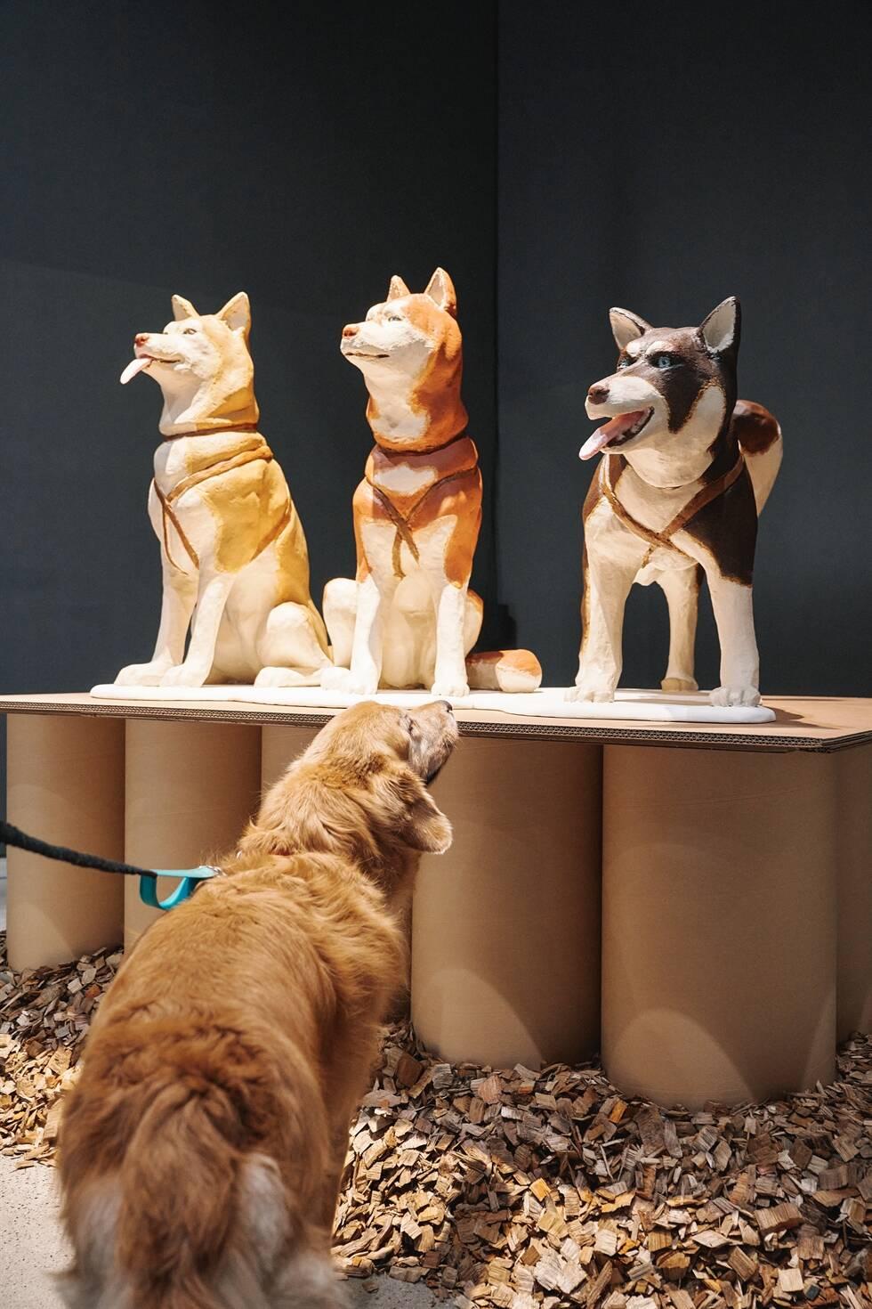 Museu de arte na Coreia do Sul cria exposição para cães
