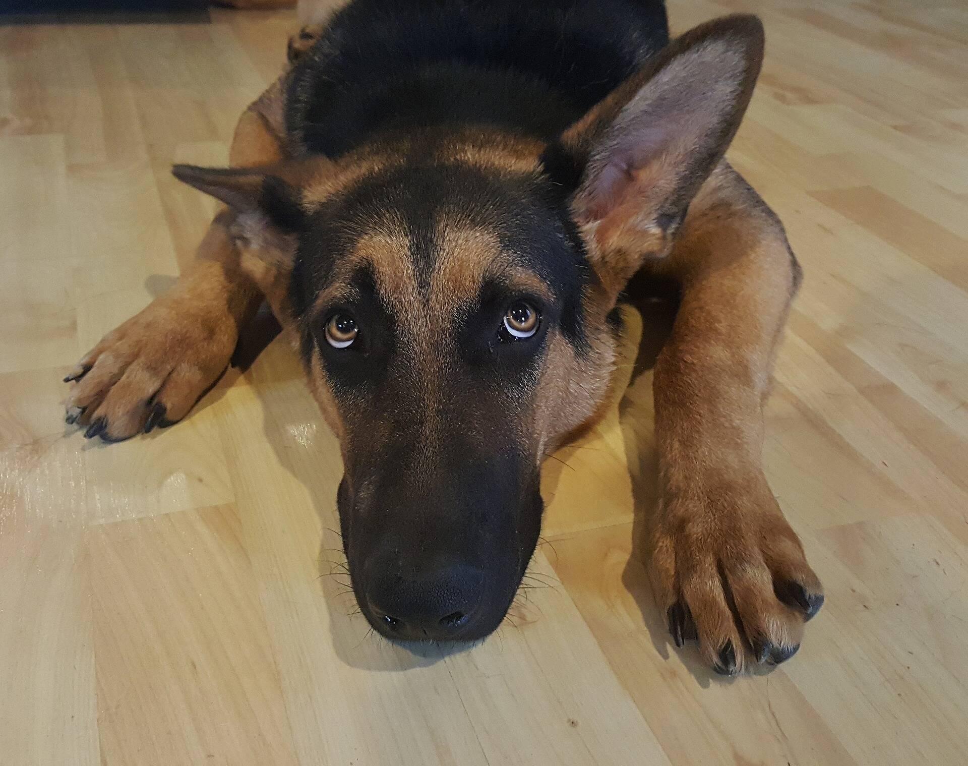 Maus-tratos contra animais: quem maltratar cães e gatos pode pegar até cinco anos de prisão