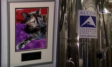 Donos congelam pets mortos por R$ 1 milhão na esperança de que a ciência os ressuscite