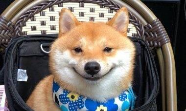 Cão sorri toda vez que vê comida e conquista a internet