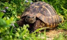 Sem sobras de restaurantes, ratos estão comendo tartarugas de estimação vivas