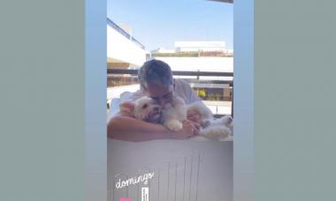 Esse vídeo com cachorrinhos mostra William Bonner como você nunca viu