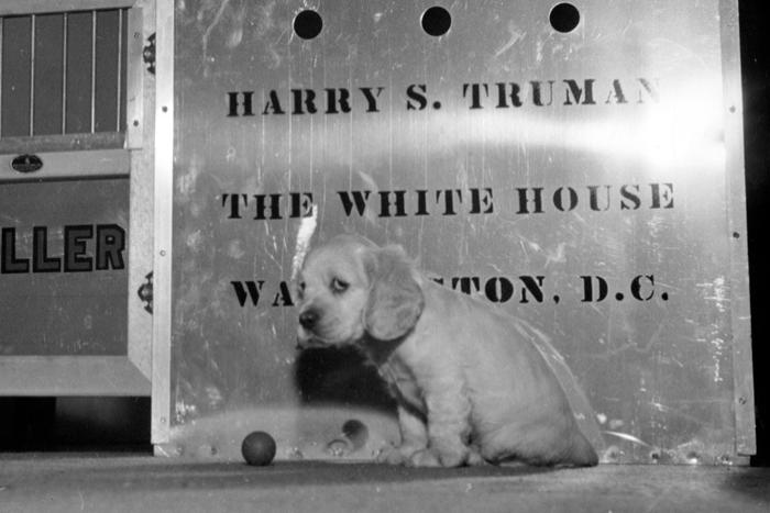 Conheça quatro cães que brilharam ao lado de presidentes dos EUA; Trump não tem nenhum