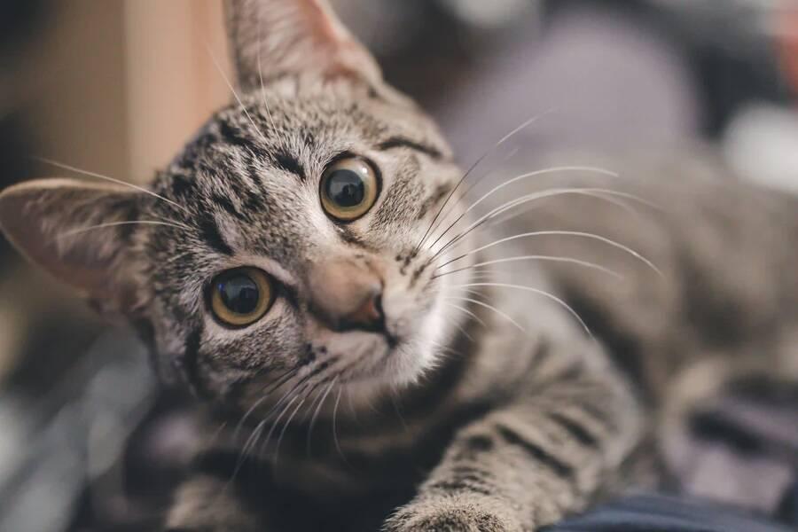 8 coisas que talvez você não saiba sobre os gatos, segundo a ciência