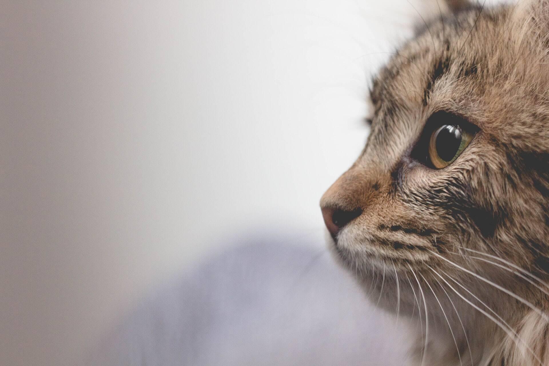 Crueldade: Com água fervente, segurança mata gata grávida e seus filhotes