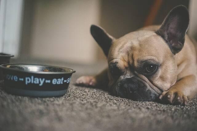 10 mitos e equívocos sobre ração caseira para cães