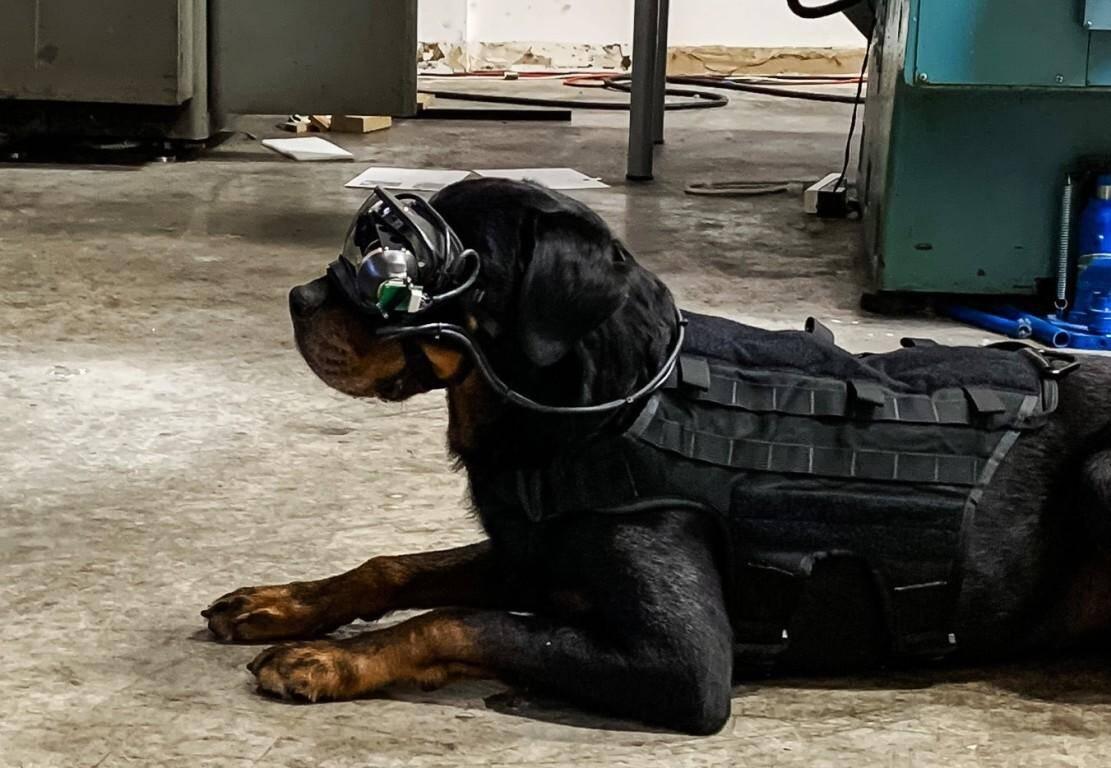Exército dos EUA está testando óculos de realidade virtual em seus cães
