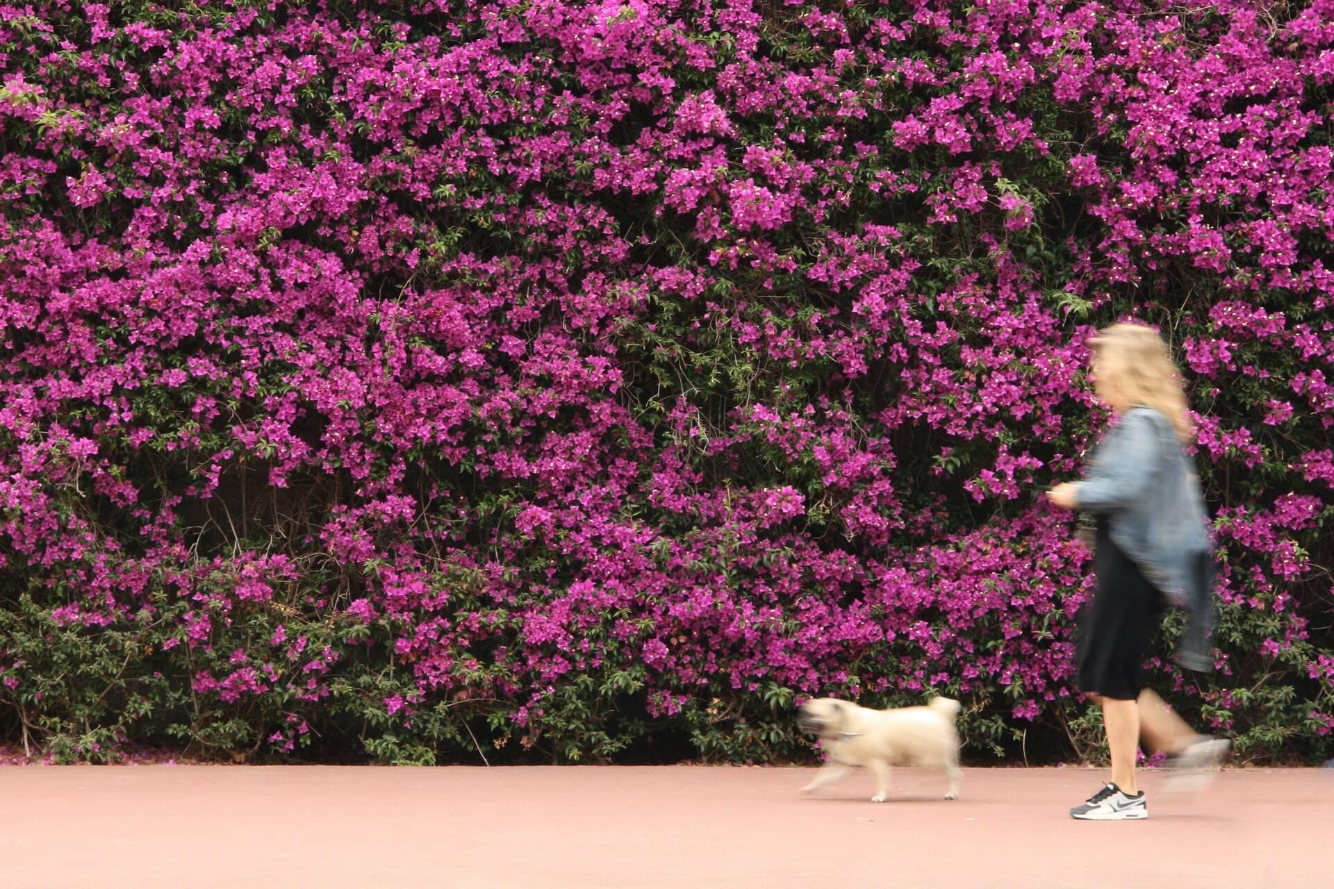 Confira 3 cuidados para passear com cães em dias quentes