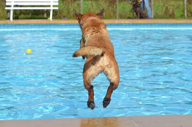Cães participam de campeonato de mergulho no Canadá