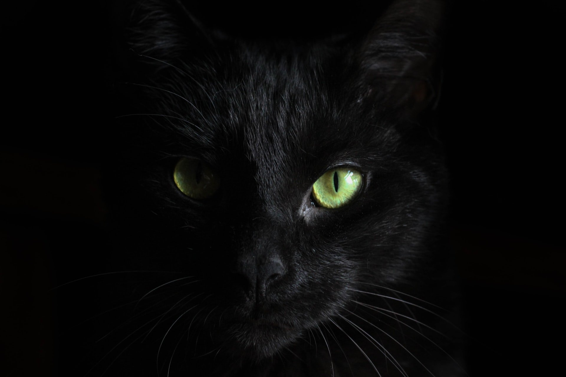 Mitos e verdades sobre os gatos pretos e o Halloween