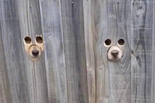 Vídeo: dono usa solução criativa para que cães vejam a rua