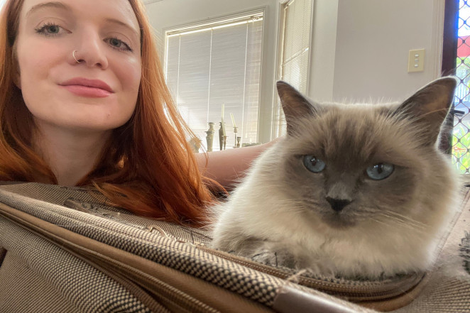 Conheça a mulher que viaja de graça pelo mundo para cuidar de gatos