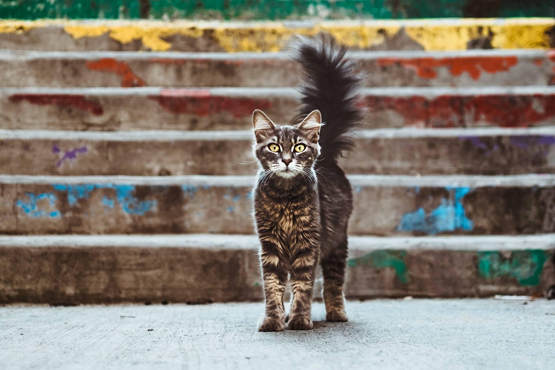 Sem comida, gatos praticam canibalismo em ilha no Rio de Janeiro