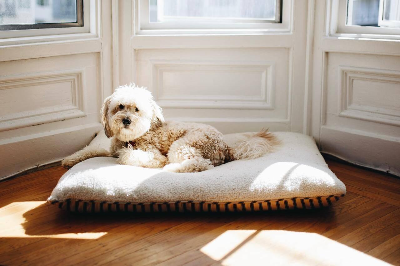 4 dicas para comprar a caminha perfeita para o seu cão