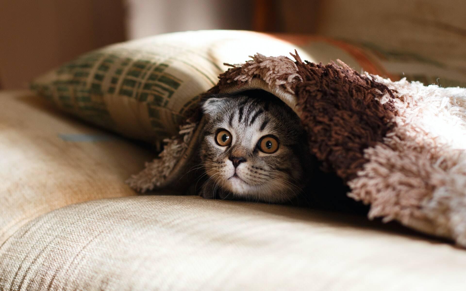 5 dicas para socializar um gato que se esconde quando as visitas chegam