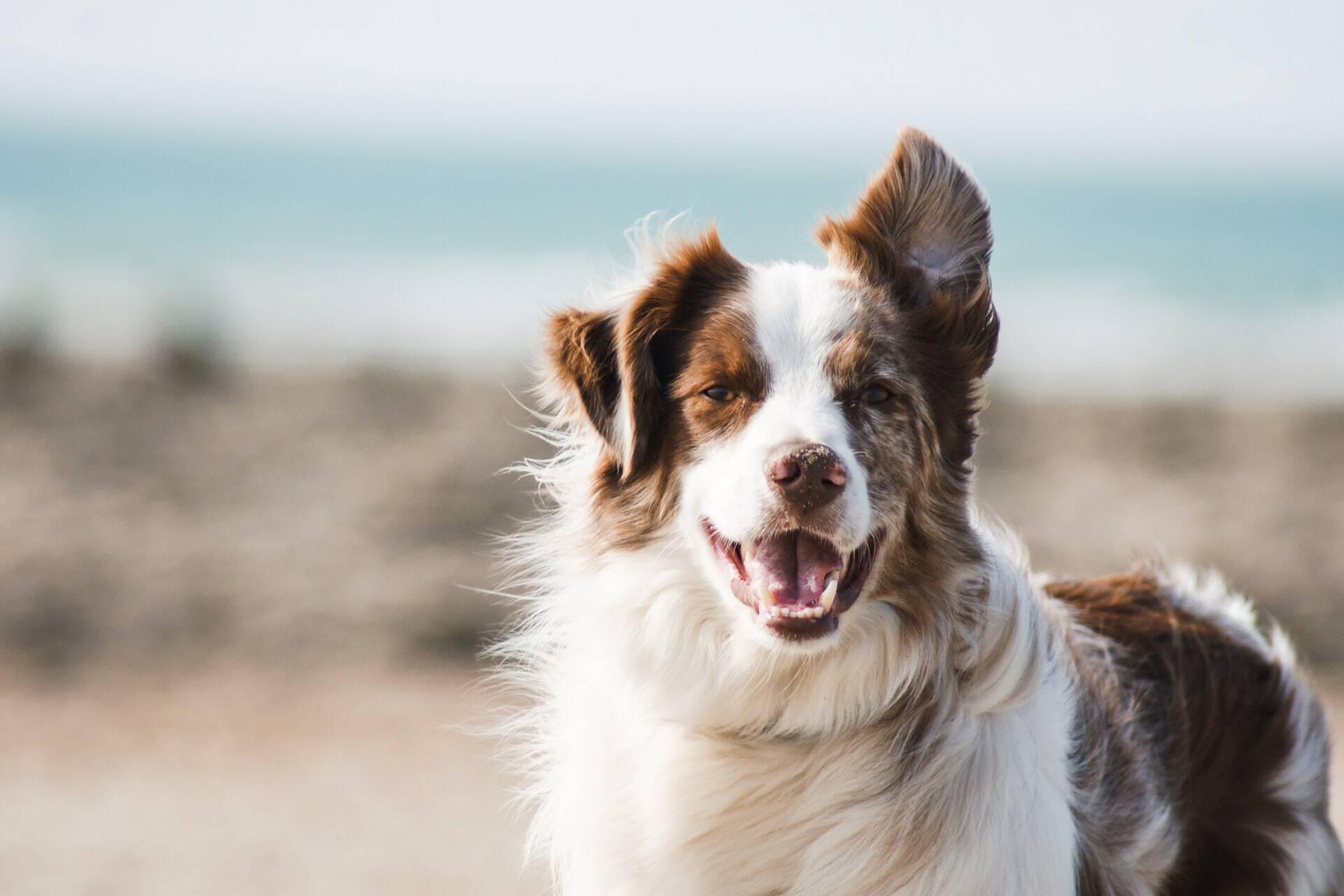 Saiba qual é a raça de cão perfeita pra você, de acordo com o seu signo