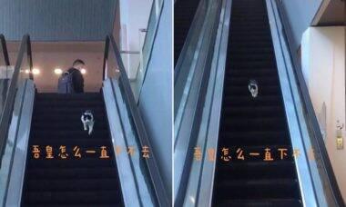 Vídeo de gato pegando a direção errada em escada rolante viraliza