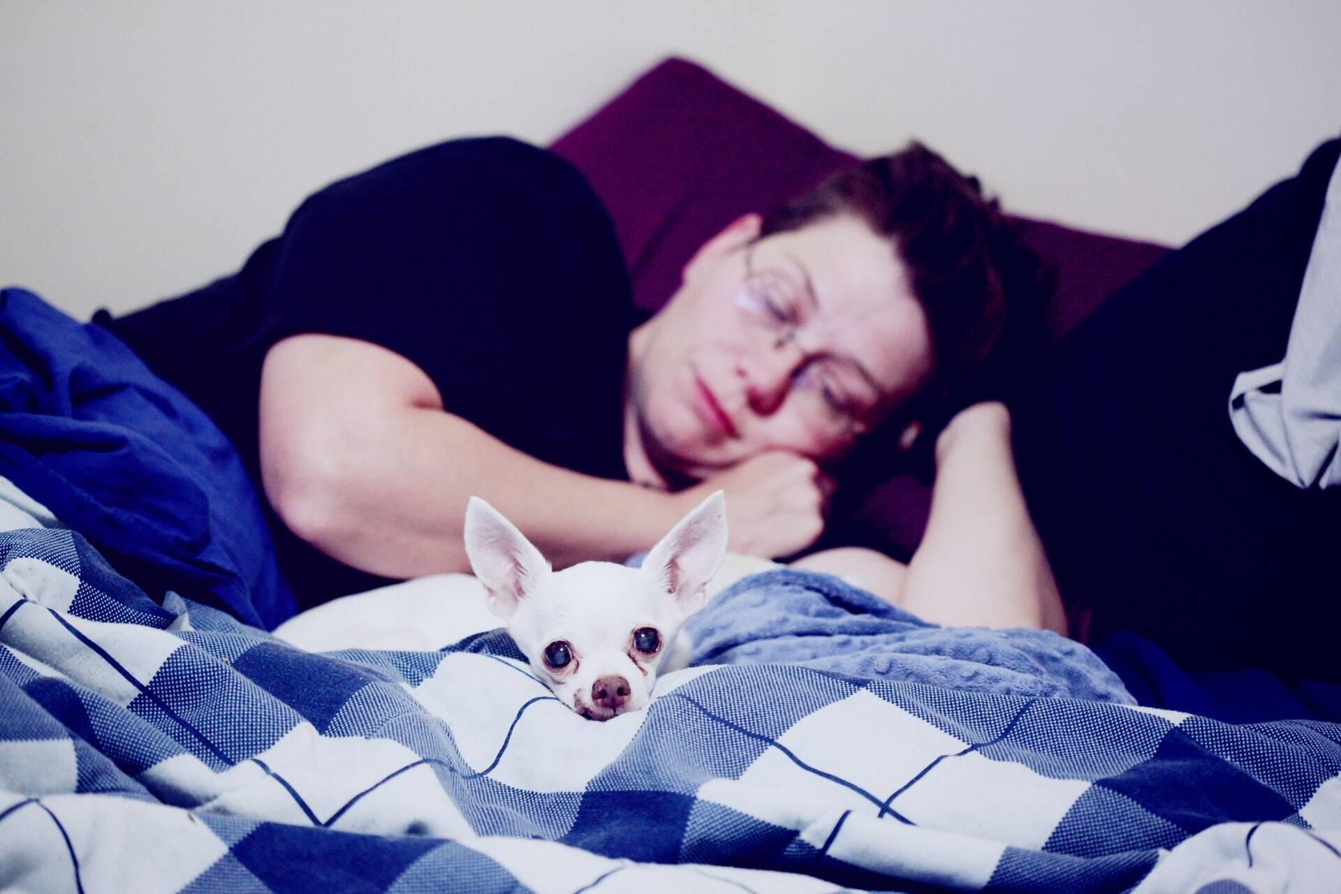 Conheça os benefícios e os riscos de dormir com o seu cão