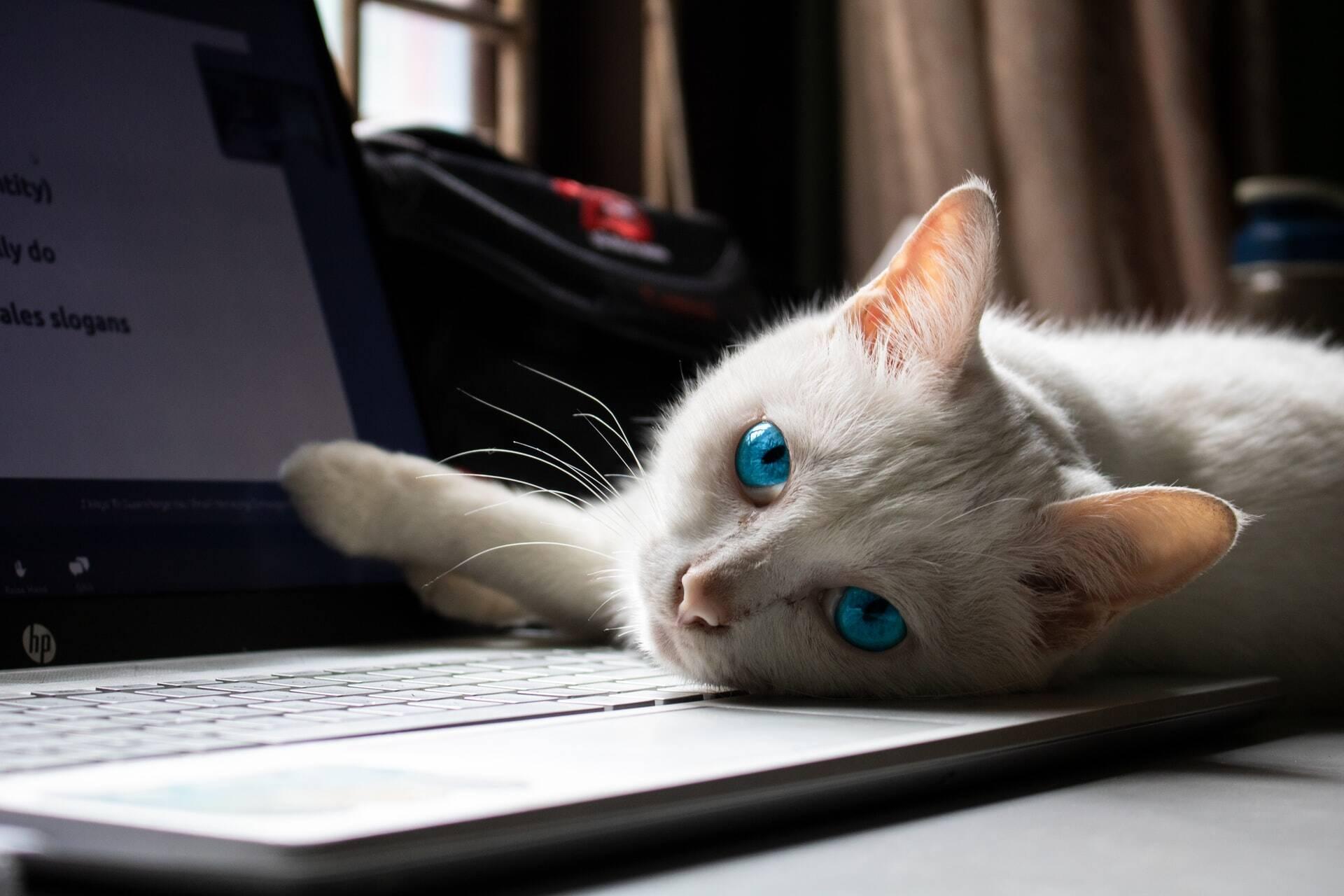 Cientistas estudam por que os gatos adoram ficar sobre o teclado do computador