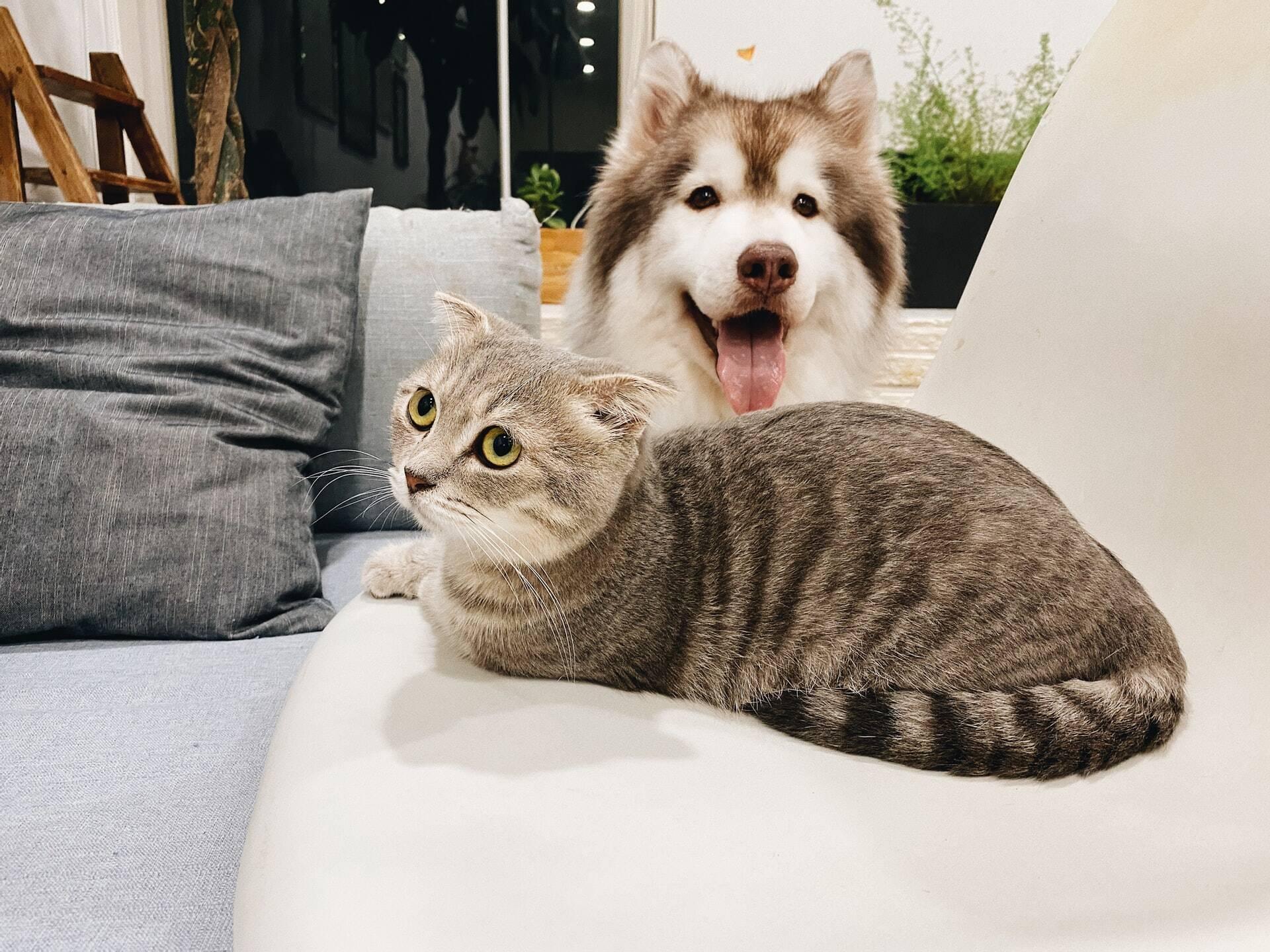 Você prefere cães ou gatos? Saiba o que isso diz sobre a sua personalidade