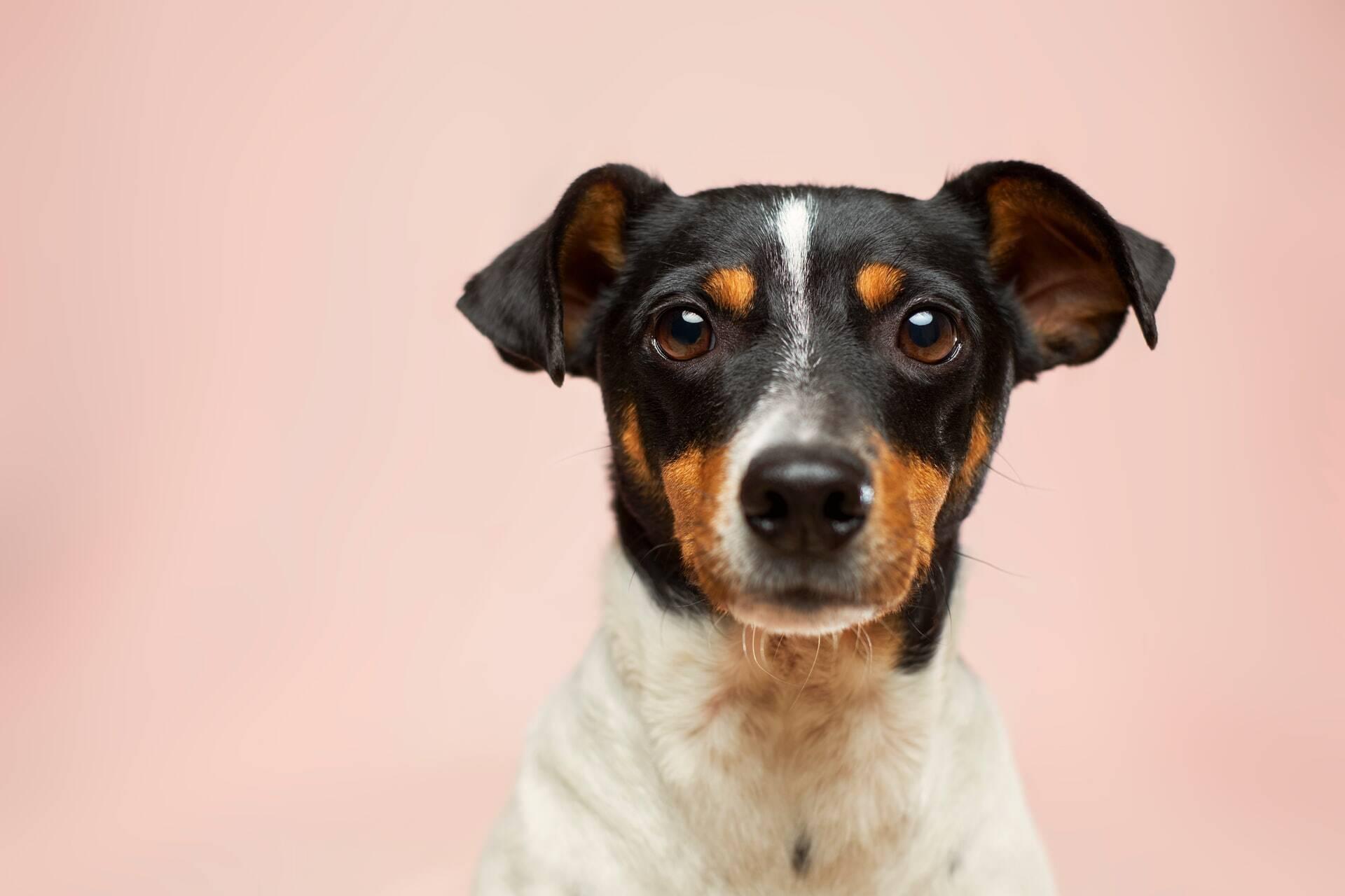 Confira os nomes para cães mais populares no Brasil