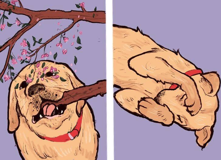 Ciência explica lambidas no rosto do dono e outros 11 comportamentos dos cães