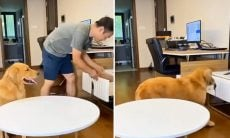 Vídeo: cachorro esperto engana o dono para ganhar petiscos em dobro