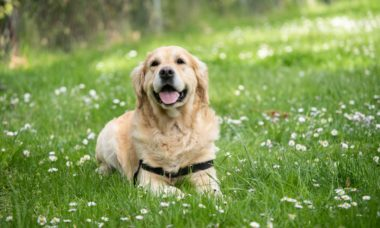3 maneiras fáceis de garantir a felicidade e a saúde do seu cão