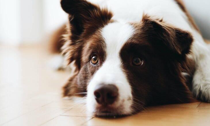 Você sabe o que o seu cão sente quando fica sozinho? Veja o que a ciência tem a dizer