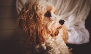 Saiba o que pode estar causando diarreia no seu cão e como tratar