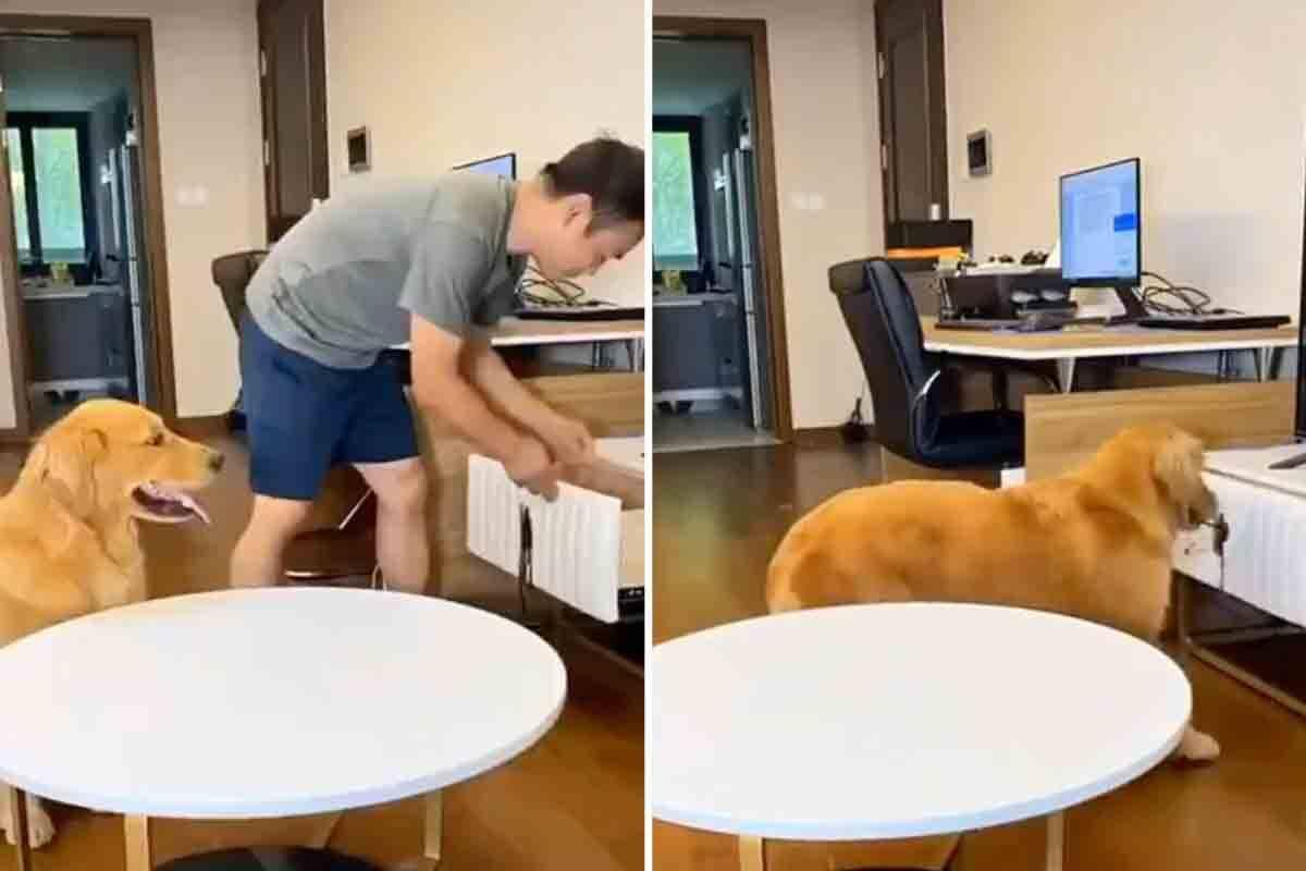 Vídeo: cachorro esperto engana o dono para ganhar petiscos em dobro. Foto: reprodução Twitter