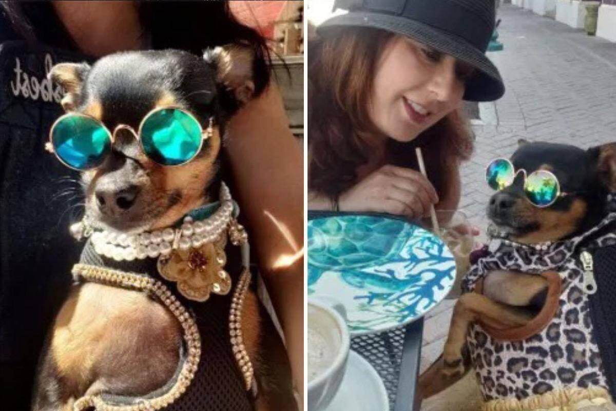 Mulher gasta mais de R$ 70 mil com o guarda-roupa da sua cachorrinha