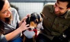 A lista de benefícios da convivência com cães não para de crescer, segundo os cientistas