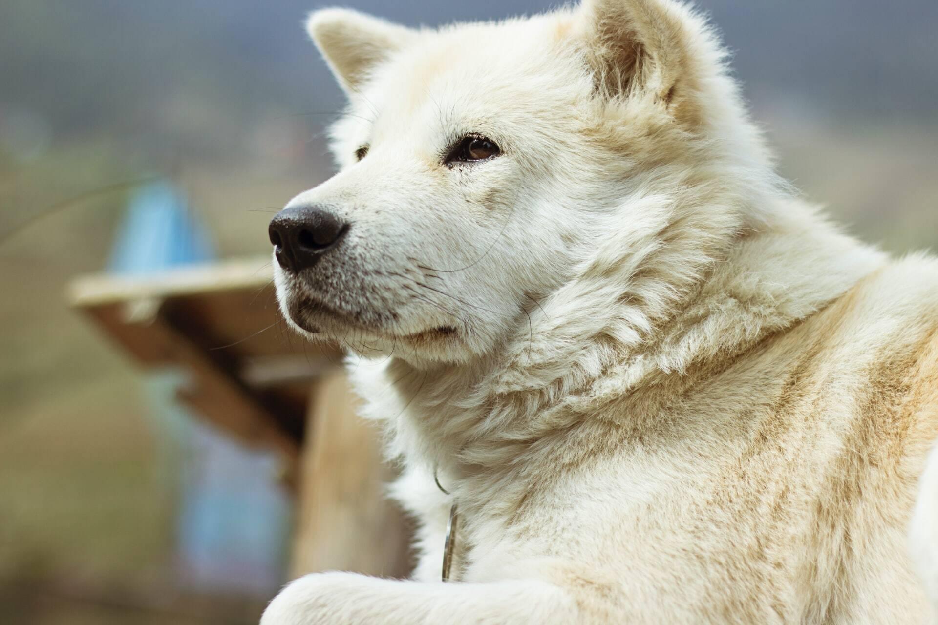 Saiba como preservar a visão de um cão idoso