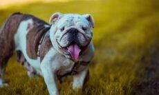 4 terapias não tradicionais que vão fazer seu cão viver mais e melhor