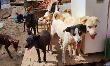 Famintos, cães devoram a própria dona no Rio de Janeiro